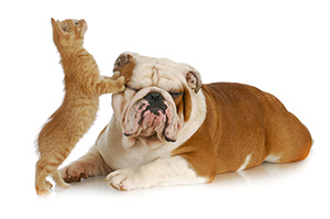 cat standing, puppy lying, friendship between cat and dog
