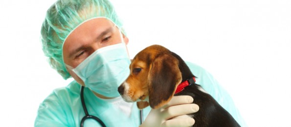 A veterinarian ready for surgery