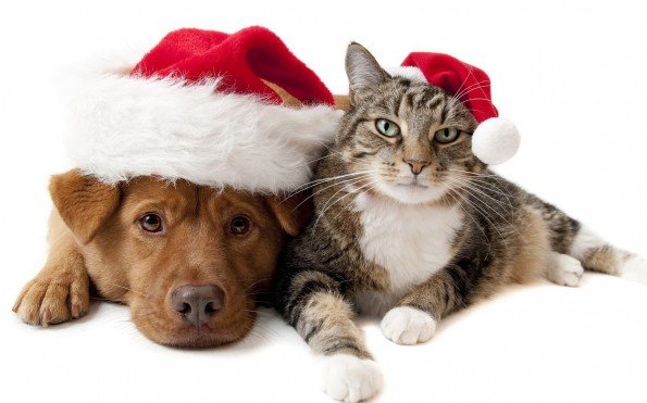 A dog and cat wearing a christmas hat